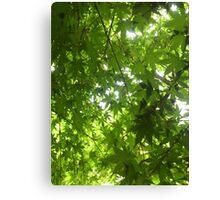 Green nature leaf Canvas Print