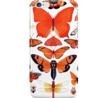 Orange Insect Collection iPhone Case/Skin