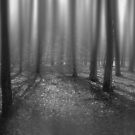 Monochrome Forest by Gray Artus