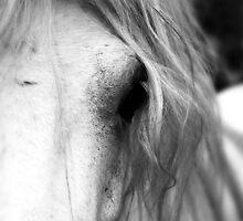 Horse by GrayA