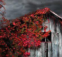 Fall Barn  by GrayA