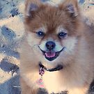 "Trixie says ""It is NEVER too cold to go to the beach! :) "" by Choux"