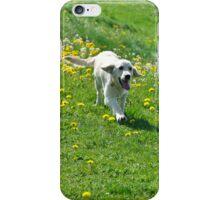 Dog iPhone Case/Skin