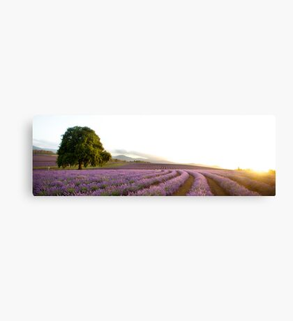 Lavender heaven Canvas Print