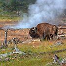 Buffalo Mud by JamesA1