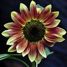 Burnt Sunflower by natureloving