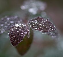 frozen drops by Franc Wiedenhoff