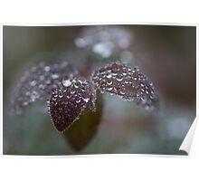 frozen drops Poster