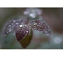 frozen drops Photographic Print