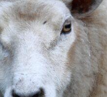 Wooly Ewe Sticker
