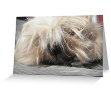 the king shih tzu Greeting Card