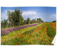 Poppies & Sage in Tuscany Poster