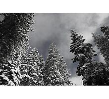 Towering Giants Photographic Print