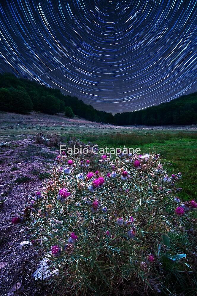 Missing the north star by Fabio Catapane