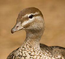 Duck By The Pond by reflector