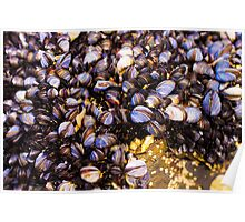 Cornish Muscles 'Newquay Beach' Poster