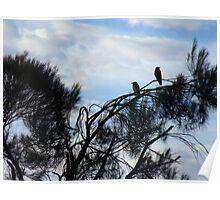 95/365 Ravens Poster