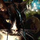 It&#x27;s Christmas for the cats! by Maisie Sinclair
