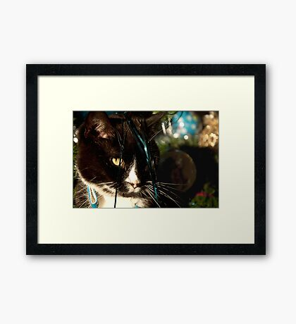 It's Christmas for the cats! Framed Print