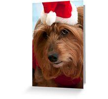 Skitsy at Christmas! Greeting Card