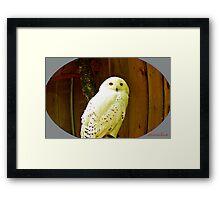 """Snowy Owl"" Framed Print"