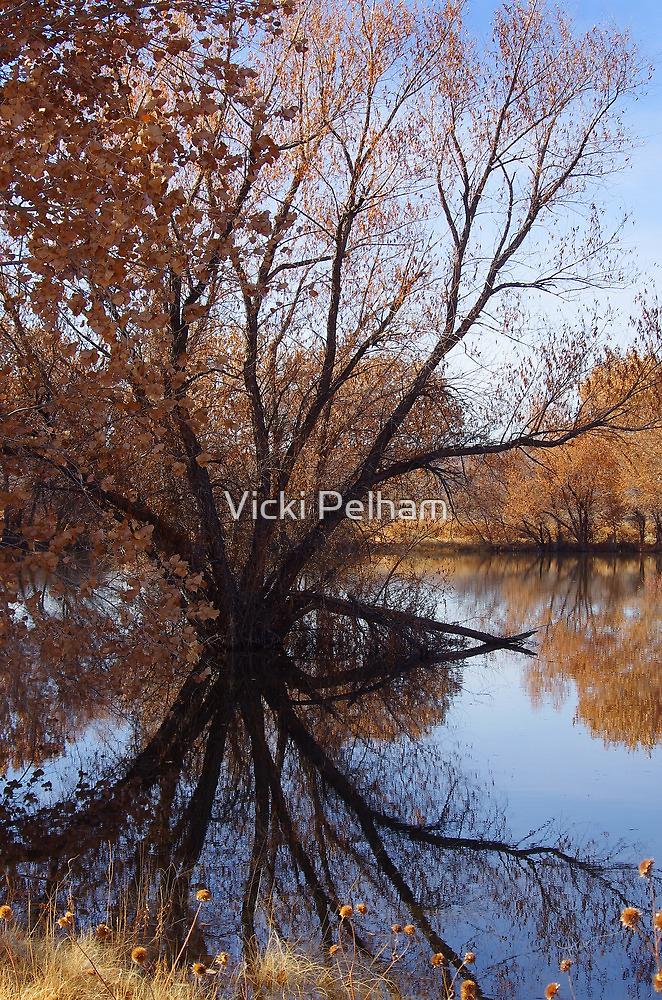Looking Glass by Vicki Pelham