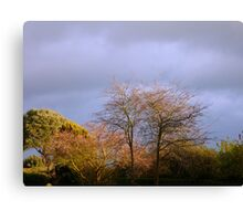 Winter trees & skies  Canvas Print