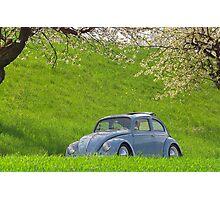 Beetle # 1 Photographic Print