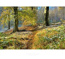 Lickey Hills, Worcestershire by Andrew Roland