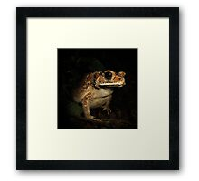 Toad from Bali Framed Print