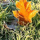 Frosty leaf by Trish  Anderson