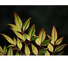 Red Stem Greenery Photographic Print