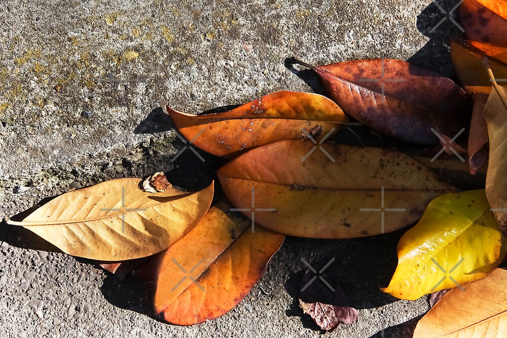 Leaves On the Road  by Heather Friedman