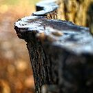 Frosty wood by Trish  Anderson