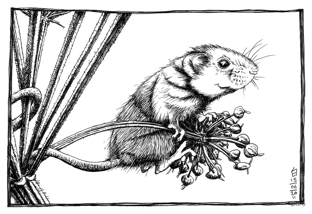 Harvest Mouse by shiro
