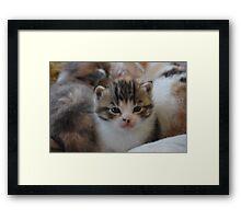 a pile of kittens Framed Print