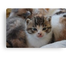 a pile of kittens Canvas Print