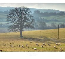 Teme Valley, Worcestershire by Andrew Roland