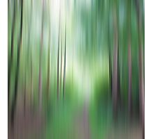 Forest no1 Photographic Print