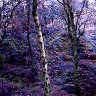 Forest no2 by LAURANCE RICHARDSON