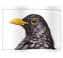 Mr B the Blackbird Poster