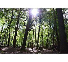 Shine a light on me Photographic Print