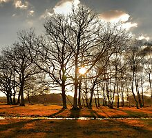 Between the Trees by MatthewWardle