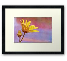 Painted Swamp Sunflower and Bud Along the Fence Framed Print