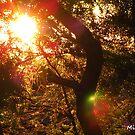 Sun Glow by MissResin