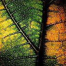 living dead leaf by nikolasafen