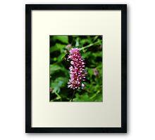 Summer Bee Framed Print