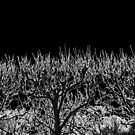 Barren Trees at Night by Tamarra