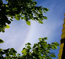 Rainbow With No Rain Revisited by Robert Phillips