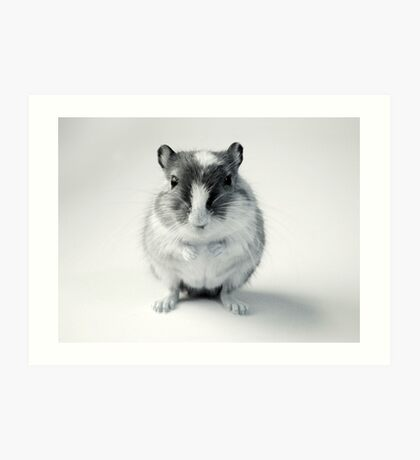 Curious Gerbil Black and White Photo Art Print